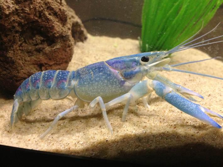 ImageUploadedByFish Lore Aquarium Fish Forum1411006896.210488