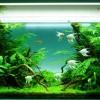 gallery_1_158_158718