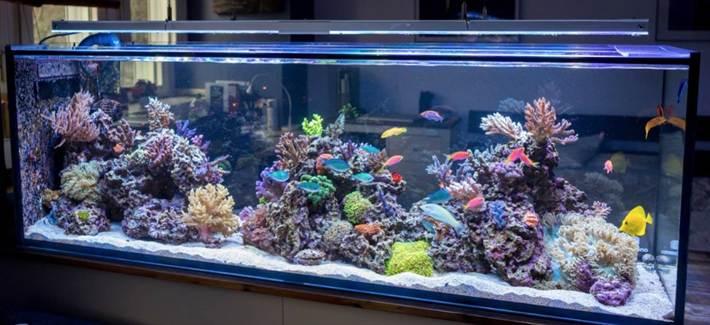 saltwater-aquarium-cost