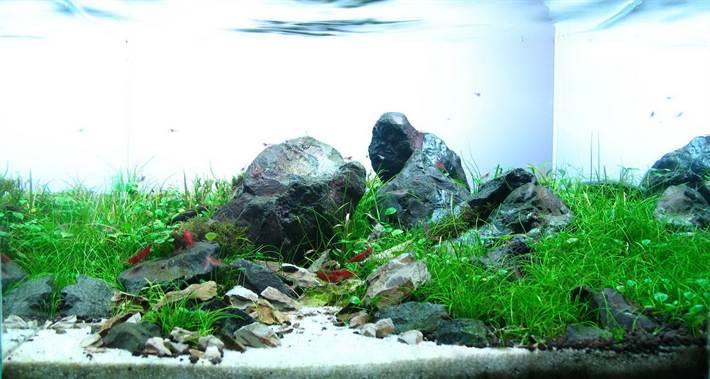 aquascaping-nano-aquarium-01