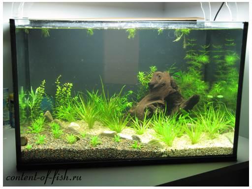 грунт для аквариума фото