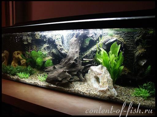 дизайн аквариума фото