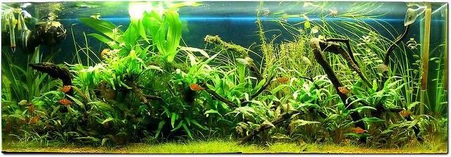 как часто чистить аквариум