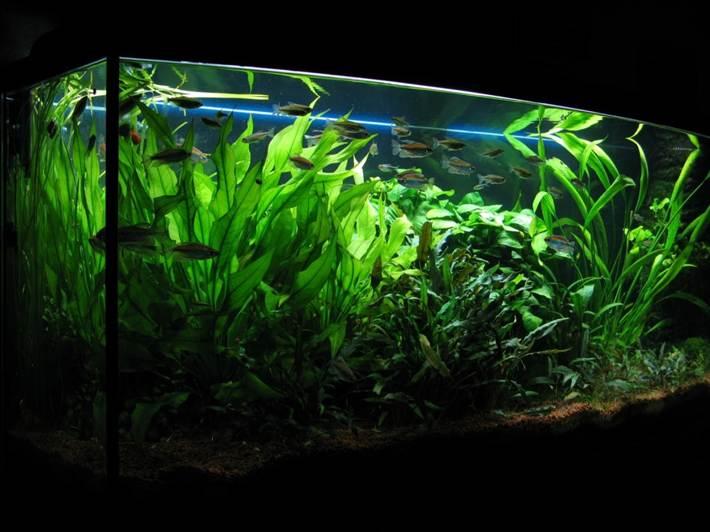 что купить для аквариума