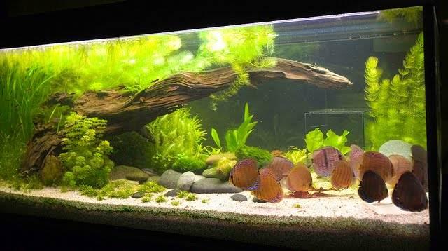 купить корягу для аквариума