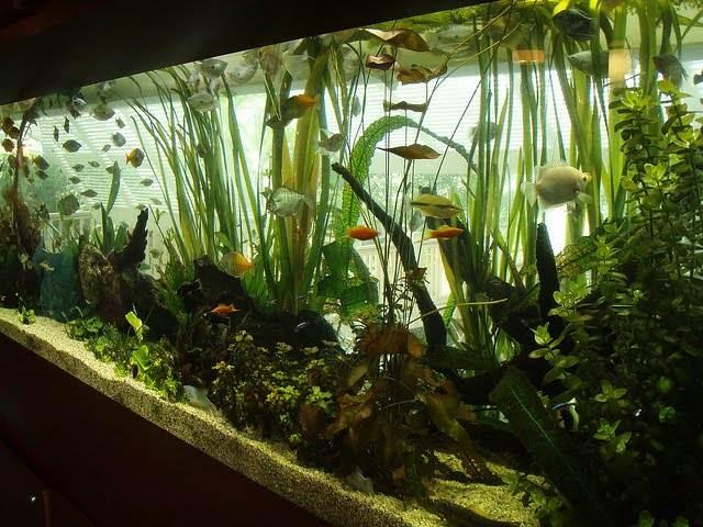 как посадить растения в аквариум