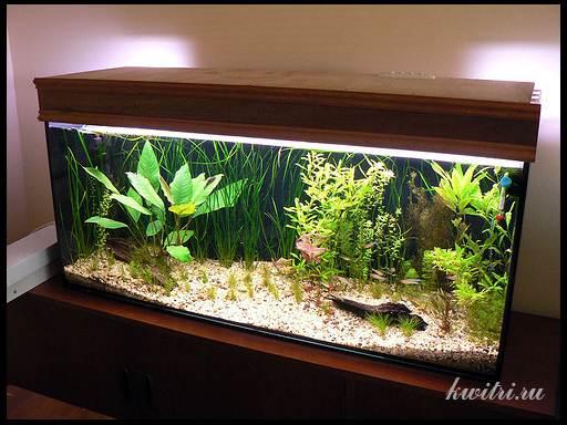 правильное освещение аквариума