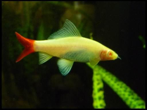самые красивые рыбки в аквариуме