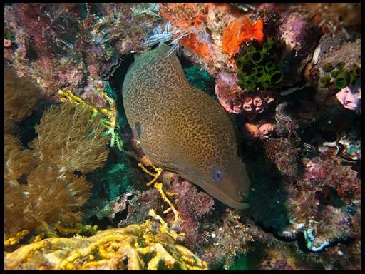 крупные аквариумные рыбки