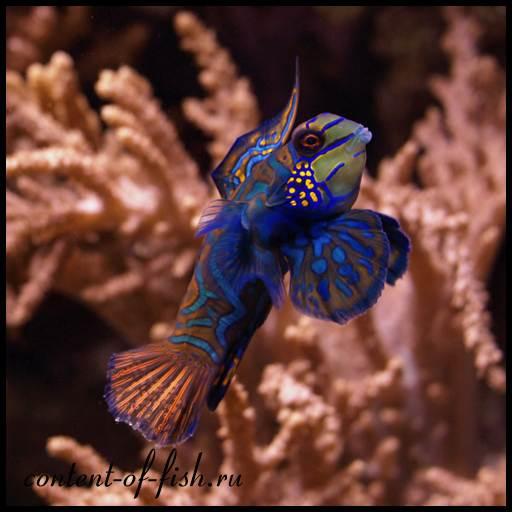 очень необычная аквариумная рыбка