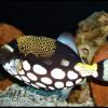 рыба-фото879
