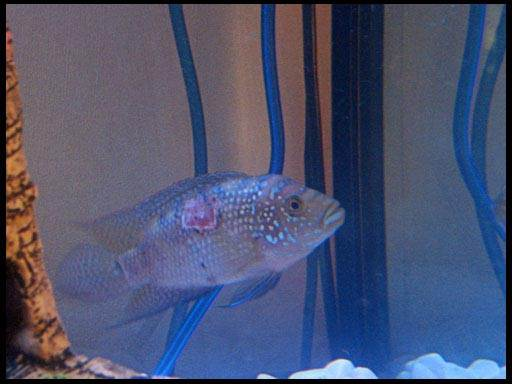 лечение рыб