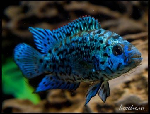 красивые рыбки