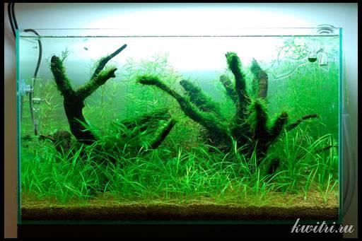 как сделать корягу для аквариума