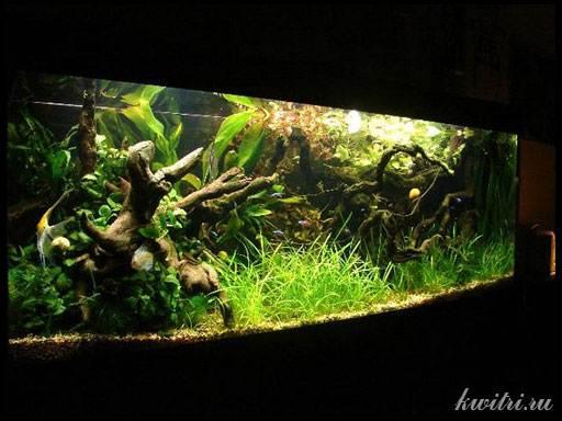 как приготовить корягу для аквариума