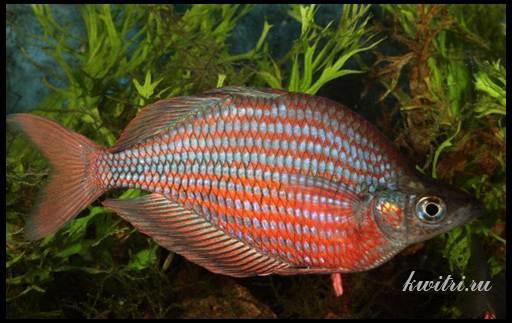 самые красивые рыбки