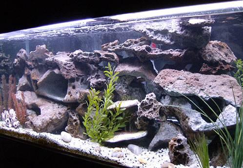 лучше оформить аквариум для Ломбардо в таком стиле