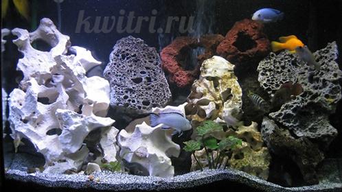 аквариум для малавийских цихлид