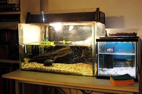 аквариум для красноухой черепахи фото