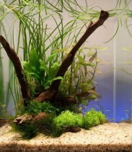 Способы очистки воды в аквариуме