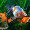 Причины болезней аквариумных рыбок1