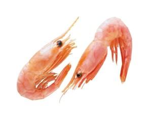 Свежий корм для аквариумных рыбок