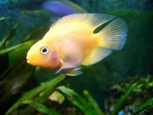 Отравление рыб Аммиаком