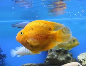 Отравление рыб продуктами химической промышленности