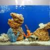металлы в аквариуме
