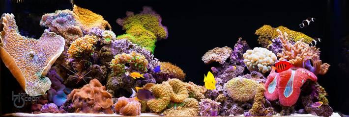 korall-5
