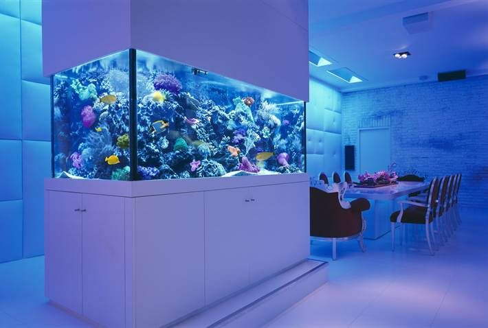 interior-room-table-chairs-sea-aquarium-fish-corral-design-wallpaper-background_aquarium-table_home-decor_traditional-home-decor-cheap-modern-nautical-decorators-coupon-code-decorator-collection-affor