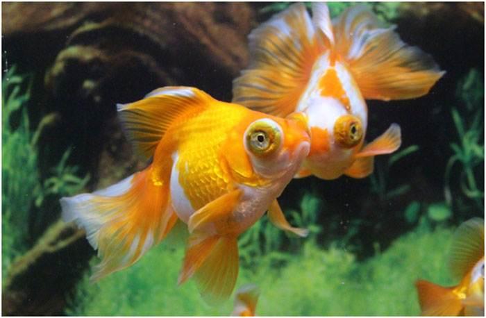 Растения в аквариуме с рыбками помогают биологическому равновесию