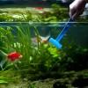 akvarium_ochistka