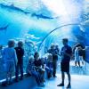 aquariumcopy