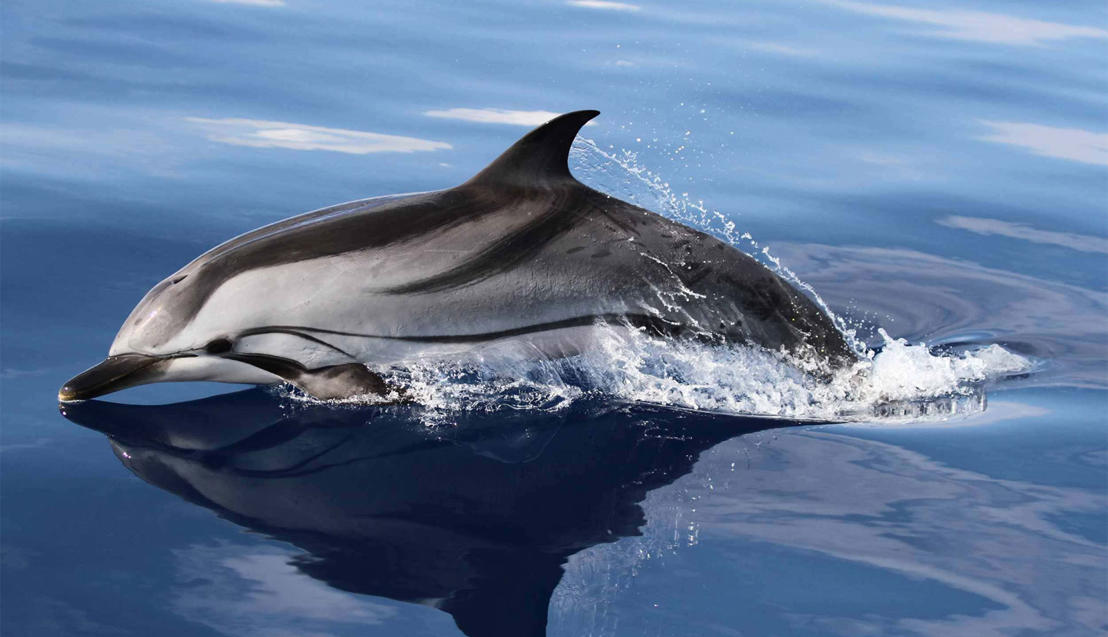 delfin1