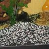 grunt-dlya-akvariuma