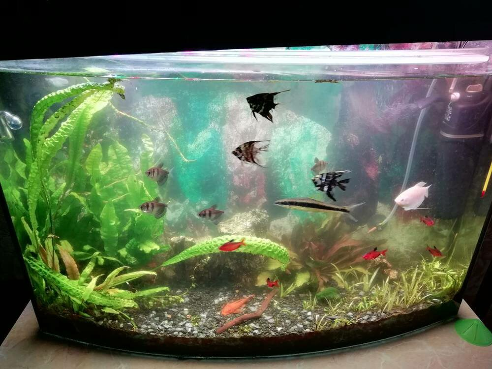 akvarium-2