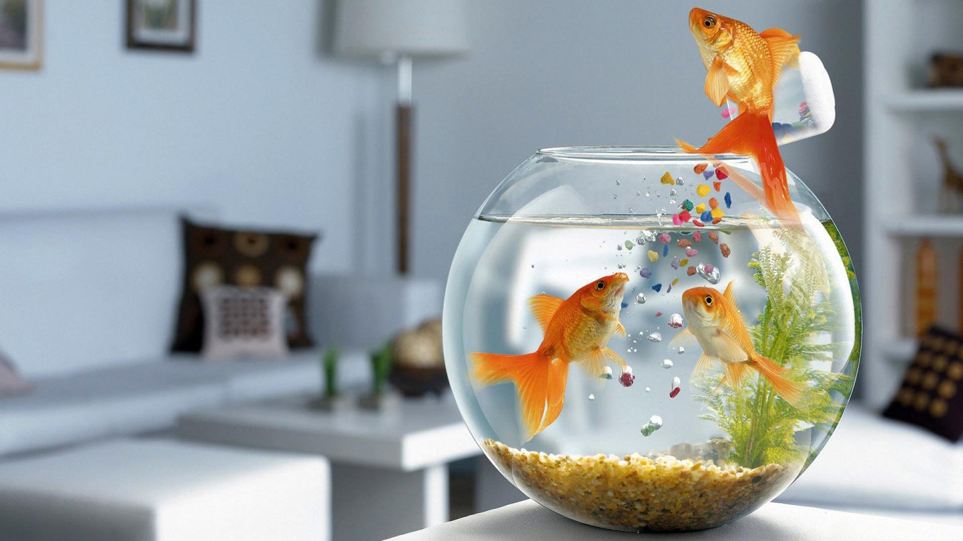 akvarium-rybki-korm