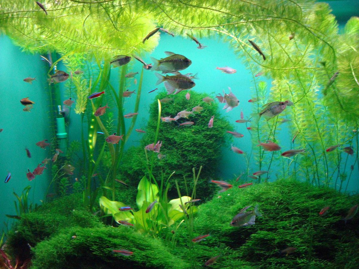 zelenet_voda_v_akvariume