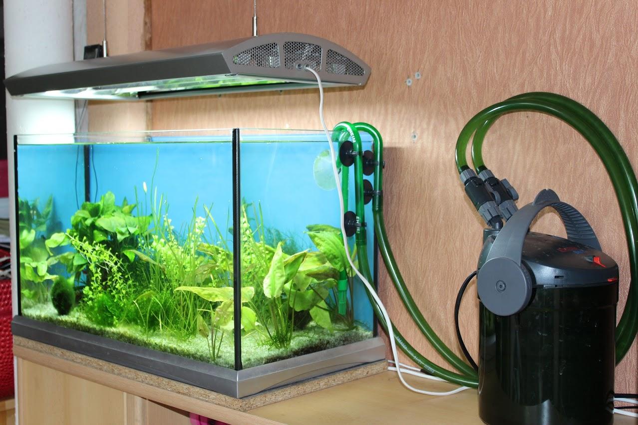 kak-pravilno-pochistit-filtr-v-akvariume-2