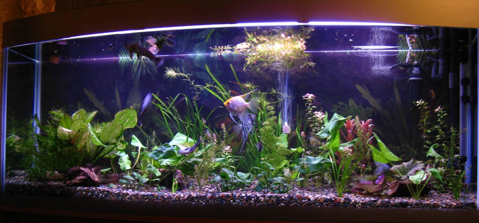 akvarium2