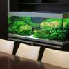 aquarium-ofis-1000x630