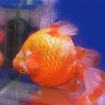 Bassler-bio-fish