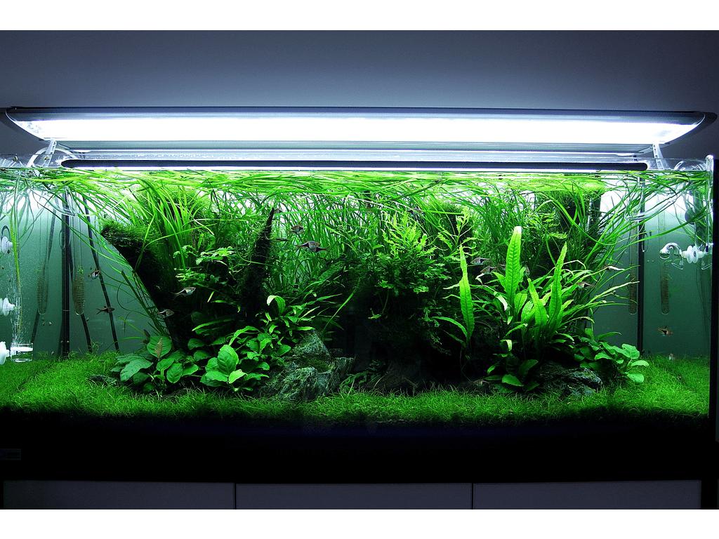osveshchenie-dlya-akvariuma
